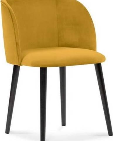 Žlutá jídelní židle se sametovým potahem Windsor & Co Sofas Aurora