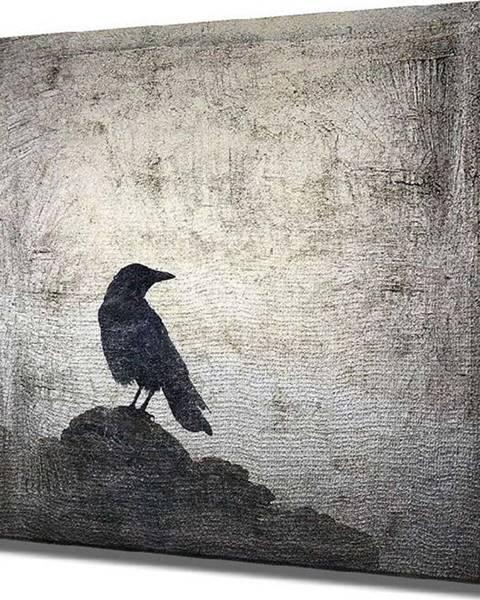 VeGA Nástěnný obraz na plátně Black Bird, 45 x 45 cm