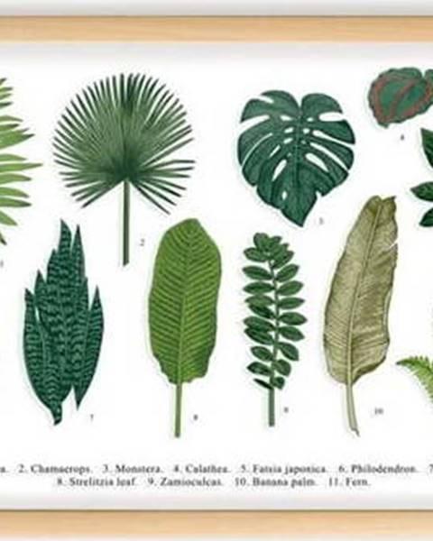 Surdic Obraz s rámem z borovicového dřeva Surdic Leafes Guide, 50 x 70 cm