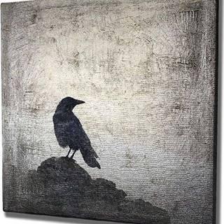 Nástěnný obraz na plátně Black Bird, 45 x 45 cm