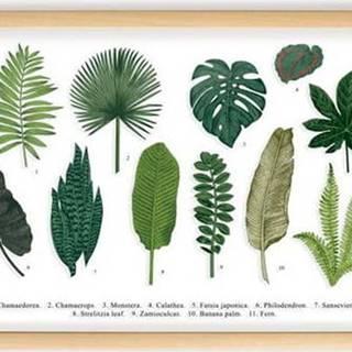 Obraz s rámem z borovicového dřeva Surdic Leafes Guide, 50 x 70 cm