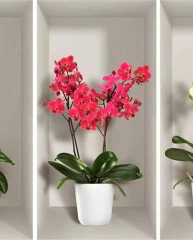 Sada 3 3D samolepek na zeď Ambiance Orchids