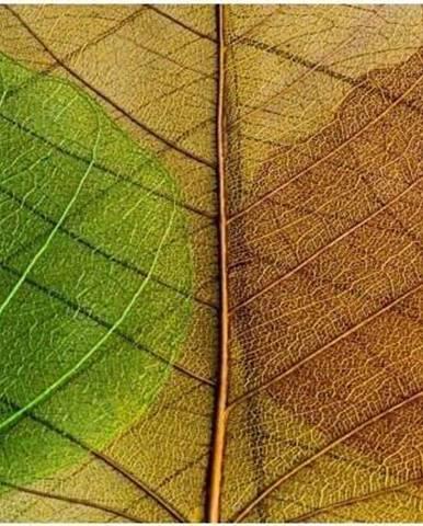 Skleněný obraz Insigne Jelke, 92x36cm