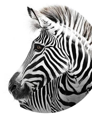 Monee OBRAZ SKLENĚNÝ, zvířata, 70 cm - vícebarevná