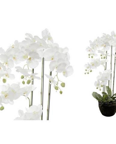 ORCHIDEJ - zelená, bílá