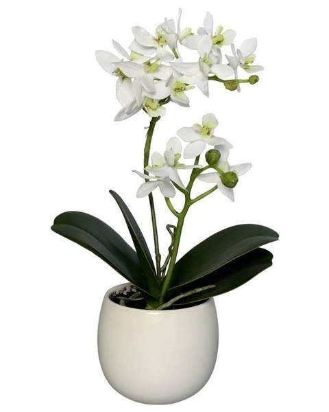 Novel UMĚLÁ KVĚTINA orchidej 34 cm - zelená, bílá