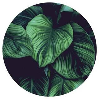 OBRAZ NA SKLE, rostliny, 30 cm - vícebarevná