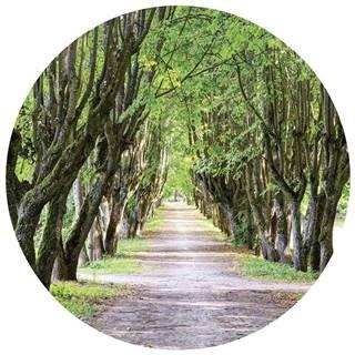 OBRAZ NA SKLE, stromy, 50 cm - vícebarevná