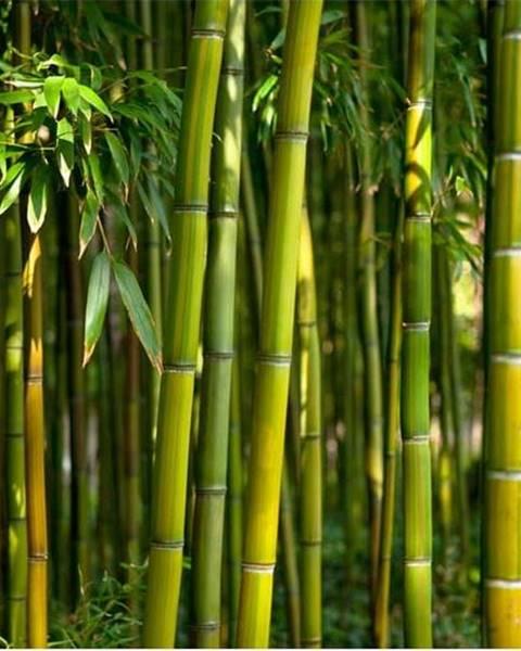 Artgeist Velkoformátová tapeta Artgeist Oriental Garden, 400x280cm